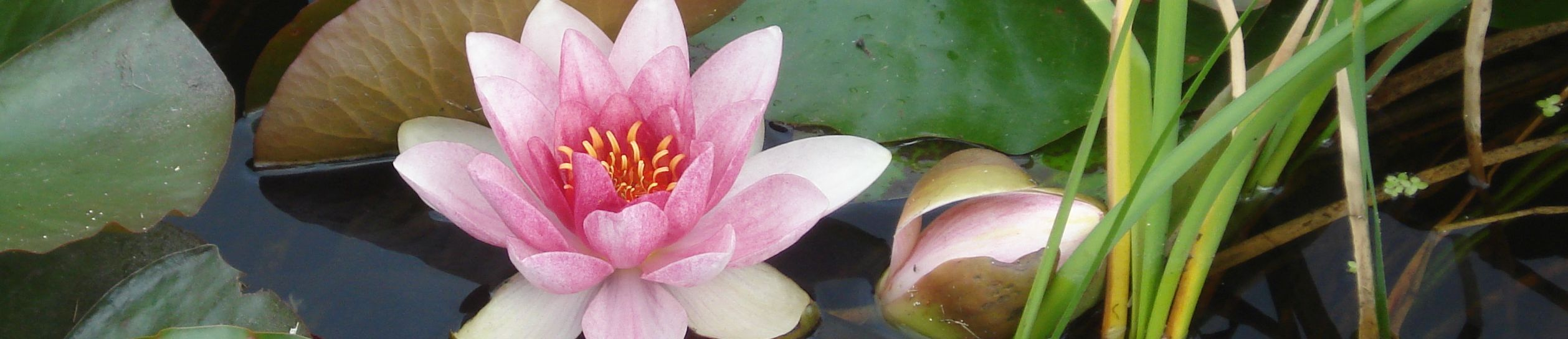 8 week mindfulness courses in Exeter